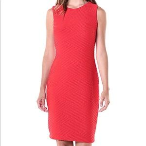 Tommy Hilfiger dress for women size 6 NWT